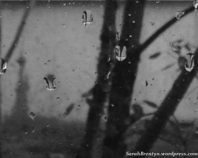 Sarah B rainy day - sig